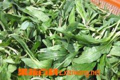 果蔬百科山野菜